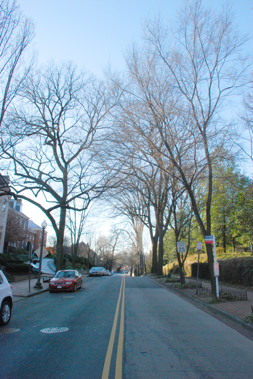 "Q St. - Georgetown's ""Elm Street"""