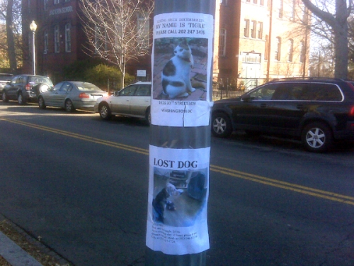 Lost Pets on the Rise?